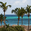 Palm On The Beach by Roberto Baez Duarte