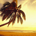 Palm Over The Beach by Ron Dahlquist - Printscapes
