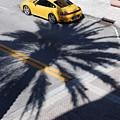 Palm Porsche by Rob Hans