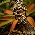 Palm Root Kahuna by Daniel G Walczyk