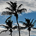 Palm Silhouette by Bob Slitzan
