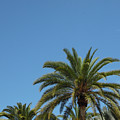 Palm Sky by Chad Kroll