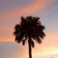 Palm Sky by David Lee Thompson
