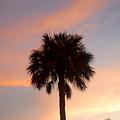 Palm Sky by David Lee Thompson
