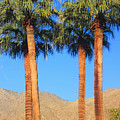 Palm Springs by Kris Hiemstra