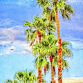Palm Springs Palms by Sandra Selle Rodriguez