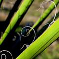 Palm Strings by PJ  Cloud