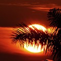 Palm Sunset by Carlos Amaro