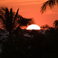 Palm Sunset by Jim DeLillo