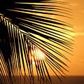 Palm Sunset by Vicki Hone Smith