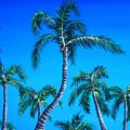 Palm Tops by Anastasiya Malakhova