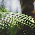 Palm Tree 5 by Andrea Anderegg