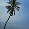 Palm Tree All Alone by Pamela Walton