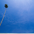 Palm Tree And Building by Rich Iwasaki