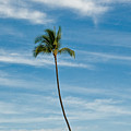 Palm Tree And Clouds by Rich Iwasaki