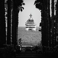 Palm Tree And Luxury Yacht by Alexandre Rotenberg