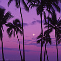 Palm Tree And Moon by Ron Dahlquist - Printscapes