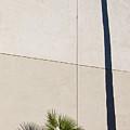 Palm Tree And Shadows by Rich Iwasaki