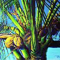 Palm Tree At Sunset by Paulene Edwards