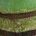 Palm Tree Bark Texture by Charmian Vistaunet