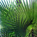 Palm Tree, Big Leafs by Sofia Metal Queen