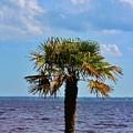 Palm Tree By The Lake by Cynthia Guinn