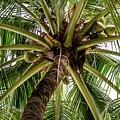 Palm Tree by David Rolt