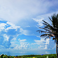 Palm Tree Dream Delray Beach Florida by Lawrence S Richardson Jr