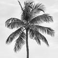 Palm Tree by Elena Elisseeva