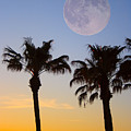 Palm Tree Full Moon Sunset by James BO  Insogna