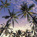 Palm Tree Grove by Greg Vaughn - Printscapes
