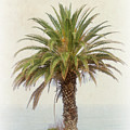 Palm Tree In Coastal California In A Retro Style by Anthony Murphy