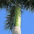 Palm Tree In Malaga by Chani Demuijlder