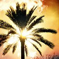 Palm Tree In The Sun #2 by Alfred Blaho