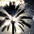 Palm Tree In The Sun #3 by Alfred Blaho
