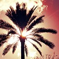 Palm Tree In The Sun by Alfred Blaho
