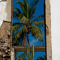 Palm Tree In The Window by Roger Mullenhour