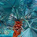 Palm Tree by Jirka Svetlik