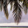 Palm Tree Leaves At The Beach by Oana Unciuleanu