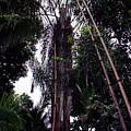 Palm Tree by Muyiwa OSIFUYE