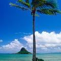 Palm Tree On The Beach Kaneohe Bay Oahu Hawaii by George Oze