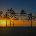 Palm Tree Paradise by Megan Martens