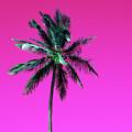 Palm Tree Puerto Rico by Vasula Tsongas