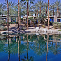 Palm Tree Reflections by David Campbell