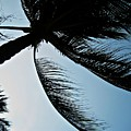 Palm Tree Silhouette by Michele Stoehr