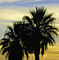 Palm Tree Silhouette by Sherri Meyer
