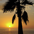Palm Tree Sunset by Jim And Emily Bush