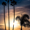 Palm Tree Sunset Silhouette by Peter v Quenter
