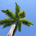 Palm Tree by Timothy Markley