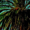 Palm Trees 40 Version 2 by Kristalin Davis